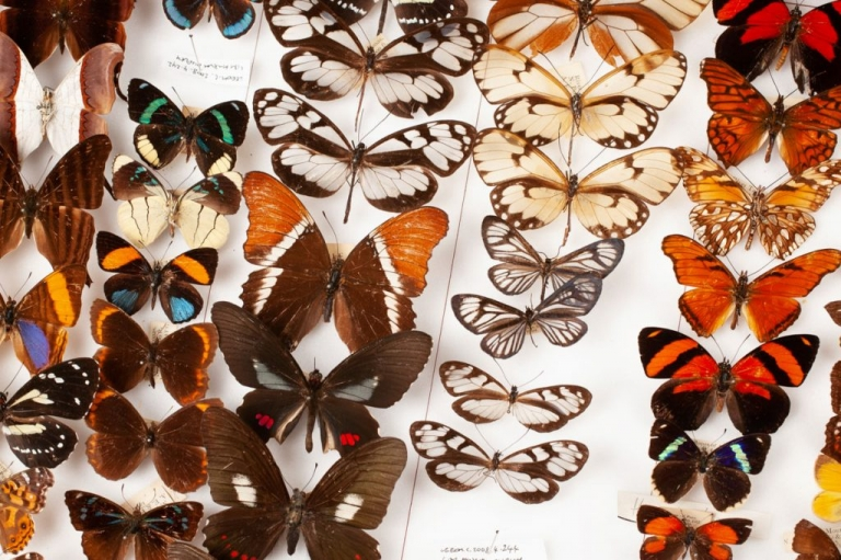 Natural history revisited. A blog post on insect photography for Leeds City Museum